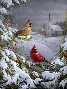 Sam Timm ~ cardinals on snowy pine branches