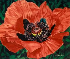 Poppy by Cindy Agan Watercolor ~  x
