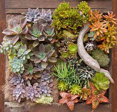 Суккуленты незаменимы в вертикальном озеленении.