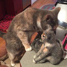 Kitty loving kitty