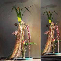 Gregor Lersch, Plant Hanger, Flower Designs, Flowers, Plants, Home Decor, Decoration Home, Room Decor, Plant