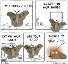 See more 'Moth Lamp' images on Know Your Meme! Funny Cute, Hilarious, Funny Animals, Cute Animals, Mothman, Fresh Memes, Know Your Meme, Stupid Funny Memes, Funny Stuff