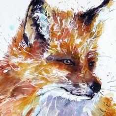 Fox Print, Red Fox