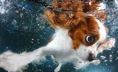 Imagenes bonitas de perros nadando bajo el agua