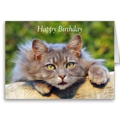 Cute fluffy cat big custom birthday card.  Change or delete text to suit requirements or leave as is.