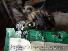 It's Anar-Kitty in the USA, starring Binga. Sing along: http://www.sparklecat.com/diary/anar-kitty-in-the-usa