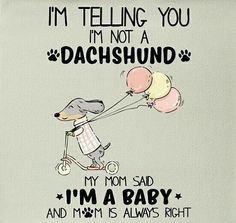 """See our website for additional relevant information on """"Dachshund dogs"""". It is a superb location to learn more. Dachshund Breed, Dachshund Funny, Dachshund Art, Long Haired Dachshund, Daschund, Doxie Puppies, Dapple Dachshund, I Love Dogs, Puppy Love"""