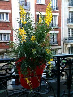 Home Paris 12   NP