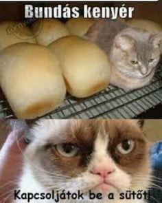 Minion Humor, Grumpy Cat Humor, Funny Fails, Funny Jokes, Funny Images, Funny Pictures, Bad Memes, Cute Funny Animals, Funny Comics