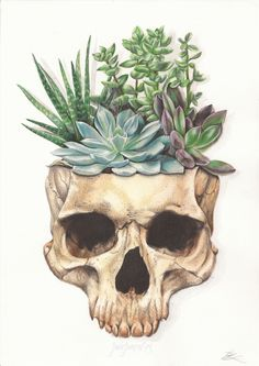 'From Death Grows Life' Conceptual mixed media art depicting a human skull with succulent plants growing from within. This represents the nature of both life and death, and how they both go hand in hand. Created using watercolours and prismacolor pencils.   www.etsy.com/uk/shop/JadeJonesArt