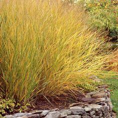Ornamental Grasses - Top 10 Plants for Seaside Gardens - Coastal Living
