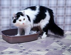 11 Cat Emergencies That Need Immediate Veterinary Attention | Catster
