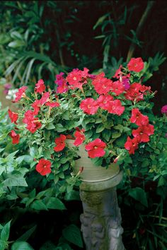 White lobelia regatta trailing flowers happy in sun or shade petunias enjoy nonstop color all season long with these container gardening ideas and plant suggestions mightylinksfo