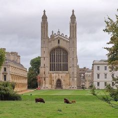 From our friends at Cambridge  @cambridgeuniversity - Good mooorning. And then there were three. Calf born at King's college. Photo by @camdiary. #cambridge #cambridgeuniversity #universityofcambridge #kingscollege #architecture #archidaily #cow #study #goviewyou