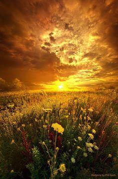 Sunset in Summer Fields ~ Marvelous Nature