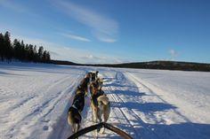 Escursione con i cani da slitta - Dogsledding (Giorgio Cossa, Kiruna)