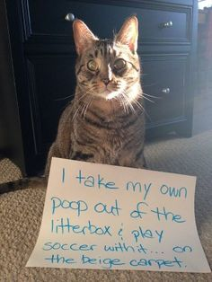 HILARIOUS Cat Confessions | MyBS I laughed until it hurt!