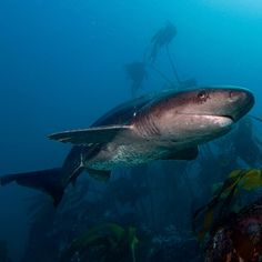 Shark picture from a PADI scuba diving fan on Instagram. Tag your images #padi on Instagram to be selected as our fan photo of the day.