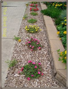 Portulaca: This plant thrives on neglect! | from The Shed blog