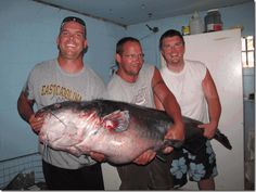 143lb catfish caught in Virginia! Read more about record fish catches in our June 13 Go Outdoors section.