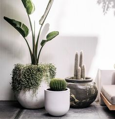 The Balcony Garden is a leading supplier of designer garden pots and planters available for sale online. Balcony Plants, Indoor Plants, House Plants, Balcony Gardening, Pot Plants, Rustic Planters, Outdoor Pots And Planters, Planter Pots, Balkon Design