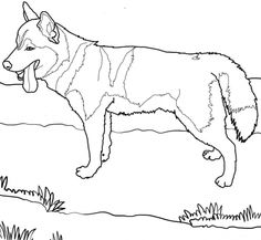 sled dog coloring pages | Stock Photo: Alaskan sled dogs | print ...