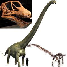 Mamenchisaurus --- wow. Amazing
