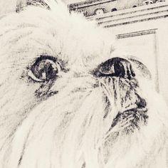 Dad wants to pretend he drew this. He didn't. He really didn't! #cutedogs #sketches #alfietheangryshihtzu #shihtzusofinstagram #shihtzugram #shihtzu #dogblog #dogoftheday