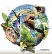 La biodiversidad es la mayor riqueza de nuestro planeta, ya que ha asegurado el mantenimiento de la vida a lo largo de los diferentes procesos geológicos que han acontecido en la Tierra (Kathy Ramos)