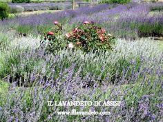 risultati immagini per creare un piccolo giardino nel prato ... - Piccolo Giardino Consigli