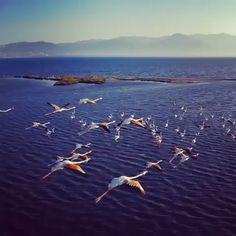 I am always scared flying my drone with birds. I am always scared flying my drone with birds. I am always scared flying my drone with birds. Nature Animals, Animals And Pets, Funny Animals, Cute Animals, Nature Pictures, Animal Pictures, Beautiful Birds, Animals Beautiful, Vogel Gif