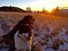 Hiking with #dogs in the mountains around #missoula #montana always gives me #inspiration #nature is a powerful elixir!