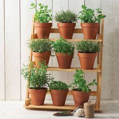 1000 Images About Herb Stands On Pinterest Herbs Herbs