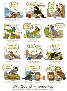 Bird Song Mnemonics: songs and calls of North American Birds---so helpful, especially if you're like us and forget migratory bird calls during the winter! Bird Calls, Bd Comics, Nature Study, Field Guide, Bird Watching, Science Nature, Nature Activities, Team Activities, Kid Science