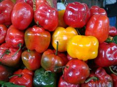 Rocoto, fiery chili peppers from the Andes
