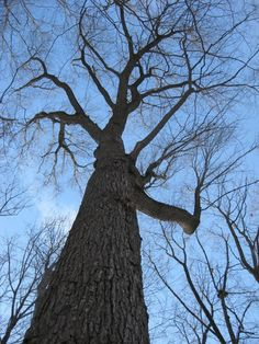 Look up and take the time to enjoy the true beauty and structure of a tree instead of staring at the snow waiting for daffodils! Follow Fernwood for other fun ideas to help the winter pass by faster.