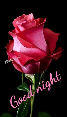 Good Night Greetings, Good Night Image, Good Morning Images, Happy Birthdays, Rose, Flowers, Plants, Quotes, Quotations