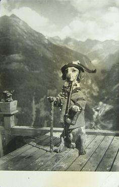 Vintage dachshund photo - dressed Alpine doxie!