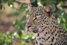 Safari Adventure, Fishing Adventure, Family Adventure, Camping Tours, Camping Gear, Kruger National Park, National Parks, Wildlife Safari, Camping Organization