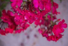 Otoño Abrilianoarte art fotografía photography photographer photoshooting nikon reflex flores jardin rosa pink garden flowers
