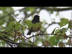 Migratory Bird Stopover Habitat in Wisconsin's Areas of Concern