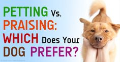 In the experiment made, the result is crystal clear that dogs spend more time with the person doing the petting rather than the person doing the verbal praise. http://healthypets.mercola.com/sites/healthypets/archive/2015/04/01/dogs-favor-petting-over-praise.aspx