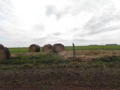 Alimentación suplementaria. Por el camino se ve que algunos criadores agregan a la pastura natural mejoras en semillas y en fibras.