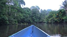 Floating down the Amazon River at dawn.