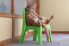 This Two-Minute Video Of A Cat Just Sitting In A Chair Is Perfect In Every Way !!!!!