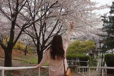 내년에또봐빠잉 핑크봄꽃봄 . . #벚꽃#축제#인천#sk#벚꽃동산#봄#cherryblossom#festival#spring#pink#landscape#flower#selfie#instagram#꽃#풍경#셀스타그램#4월12일 by eunjicutie
