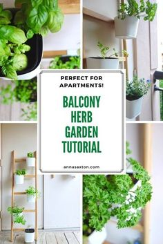Check out this easy balcony herb garden using the Ikea Satsumas ladder -   it's perfect for apartments and other small spaces! You CAN grow your   own herbs, even if you only   have a tiny patio. Bonus - this is an easy, budget-friendly way to   decorate your balcony!  #balconyinspo #apartment #herbgarden Small Watering Can, Balcony Herb Gardens, Green Onions Growing, Plant Ladder, Ikea Must Haves, Plant Box, Fake Plants, Potting Soil, Easy Budget