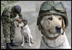 Puppy Rescue Mission