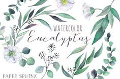 Watercolor Eucalyptus Leaf Pack by PaperSphinx on @creativemarket