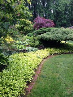 Hosta Kabitan border Small Japanese Garden, Stepping Stones, Garden Design, Garden Ideas, Sidewalk, Fox, Gardening, Outdoor Decor, Plants